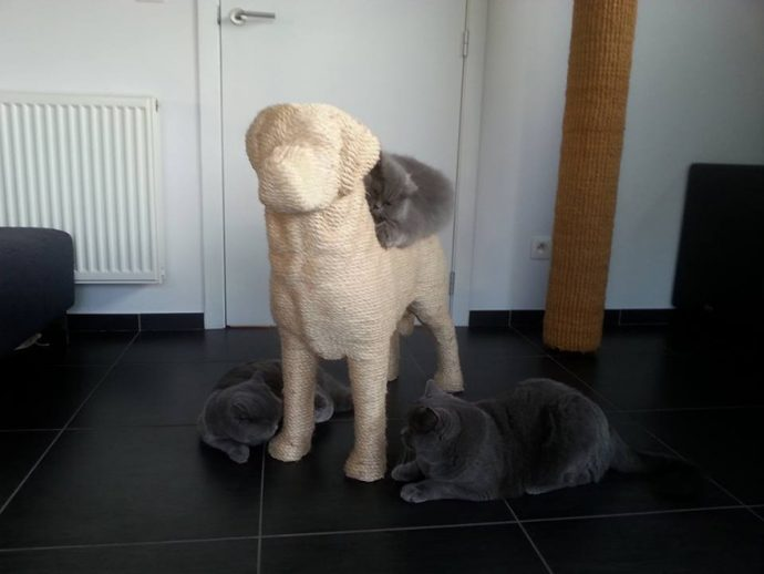 пес для кота рис 3
