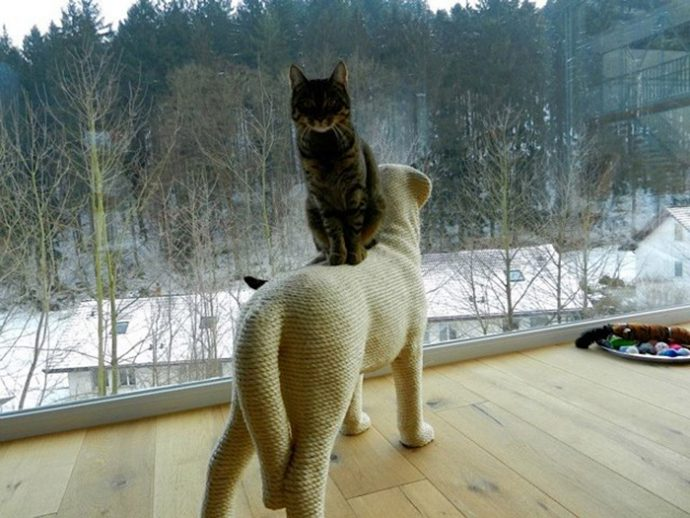 пес для кота рис 4