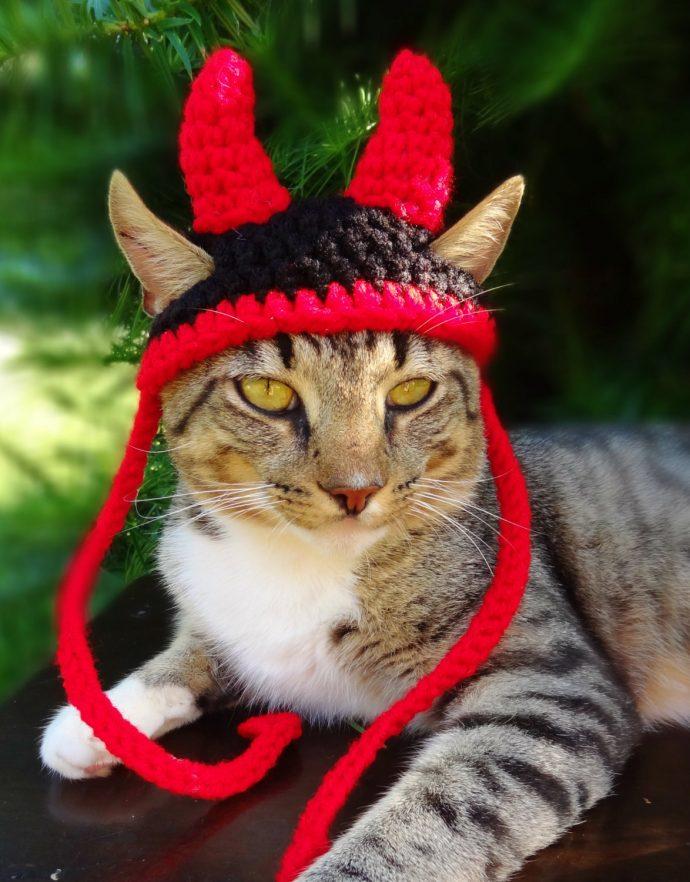 кошачья мода рис 4