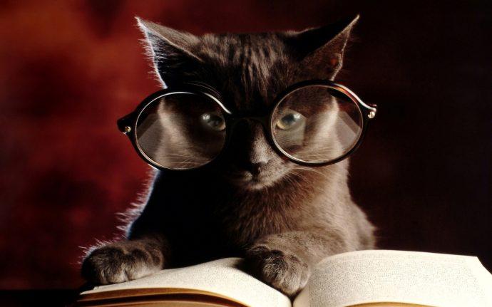 интеллект кота рис 5