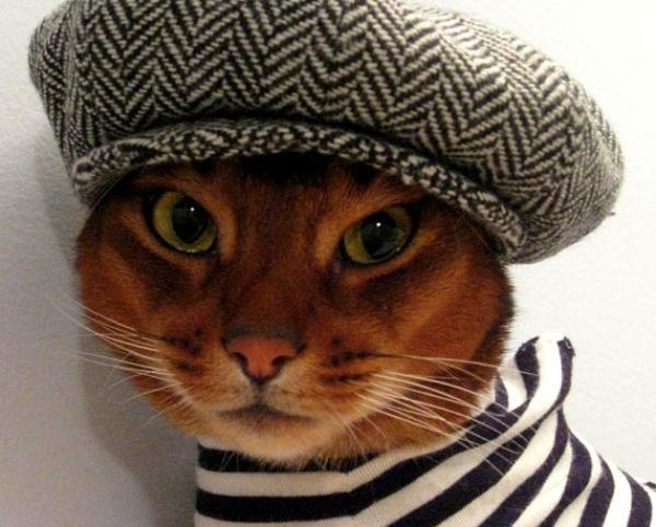 кошачья мода рис 5