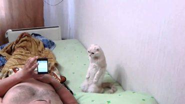 кот и гимн