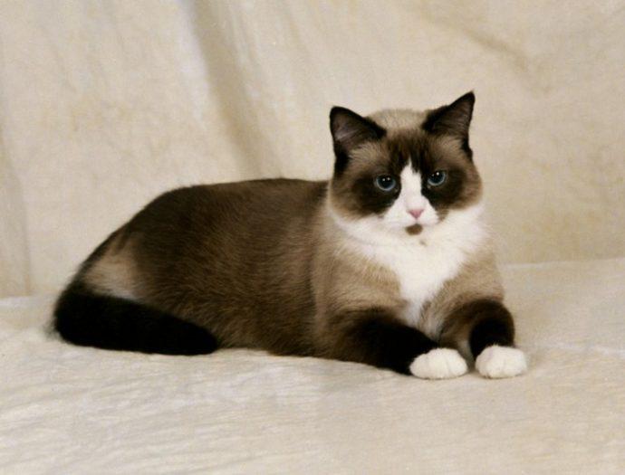 редкие кошки рис 2