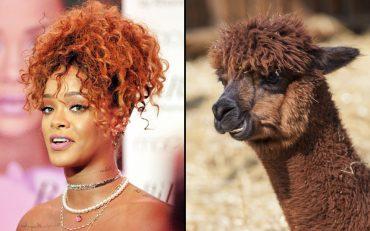 знаменитости VS животные