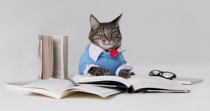 интеллект кота