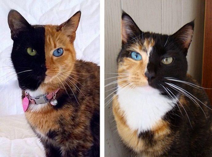 цветные коты