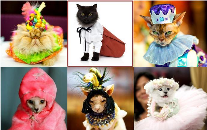 коты наряды