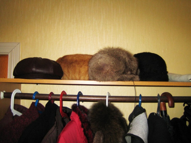 find a cat