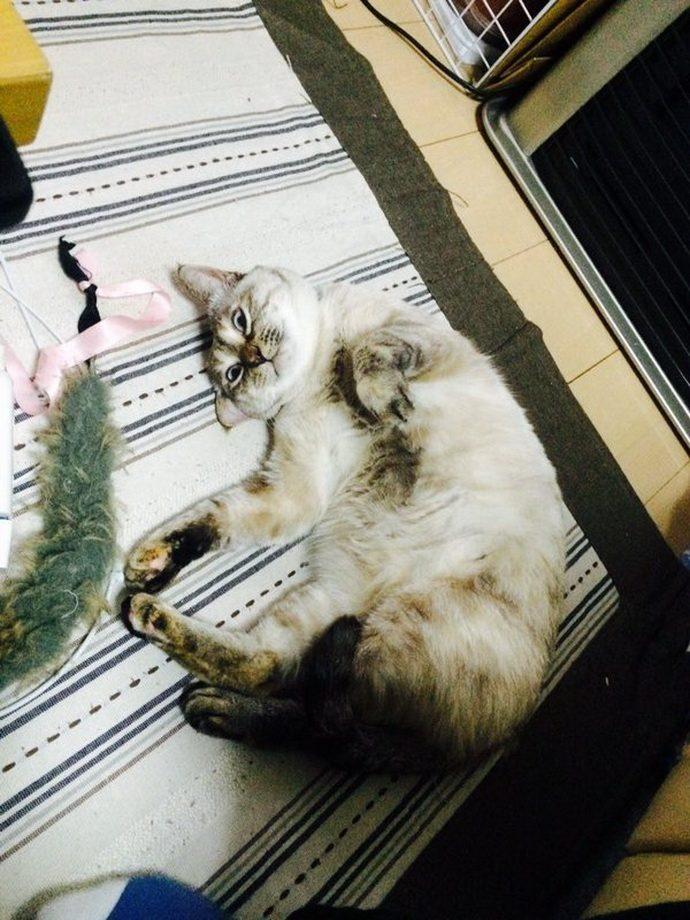 kitten рис 7