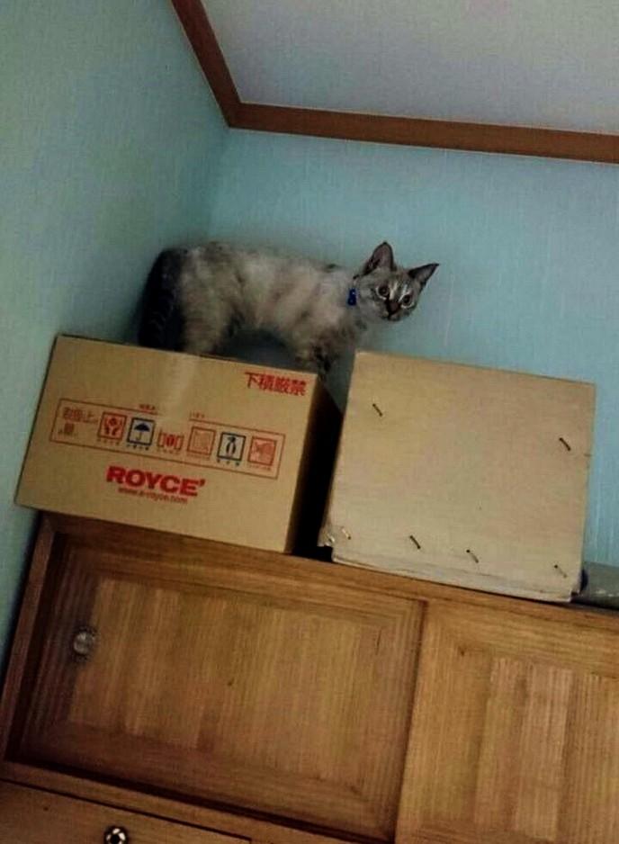 kitten рис 3