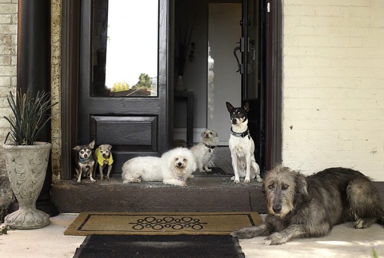 animals shelter