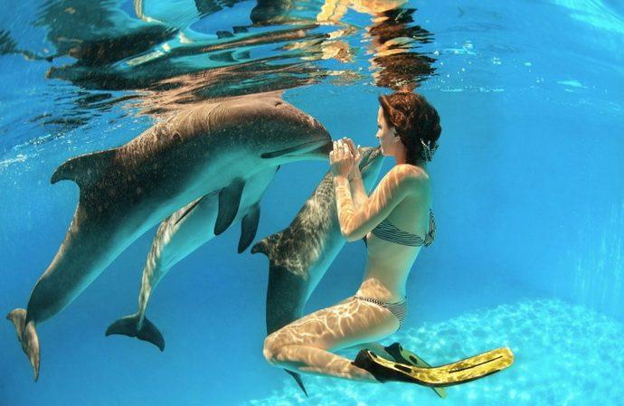 dolphins рис 3