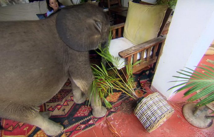 слоненок рис 8