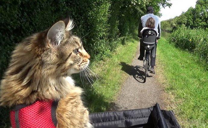 Iris & cat