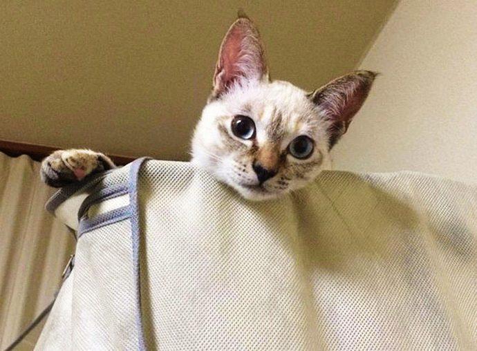 kitten рис 5