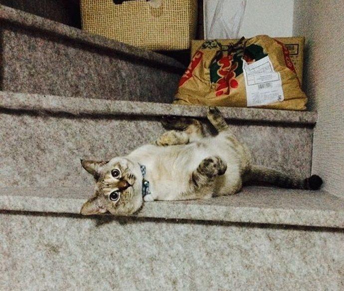 kitten рис 6