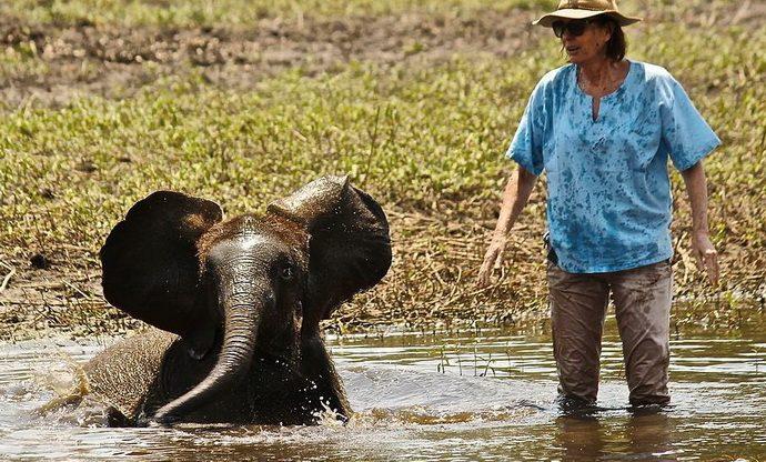 слоненок рис 12