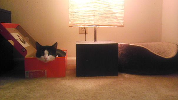 cats-logic (4)