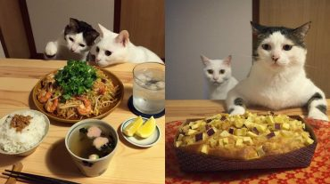 cats watching people eat
