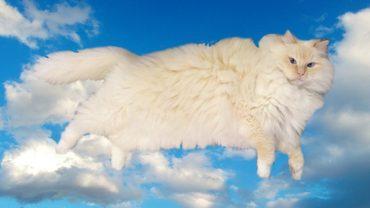 cloudcat