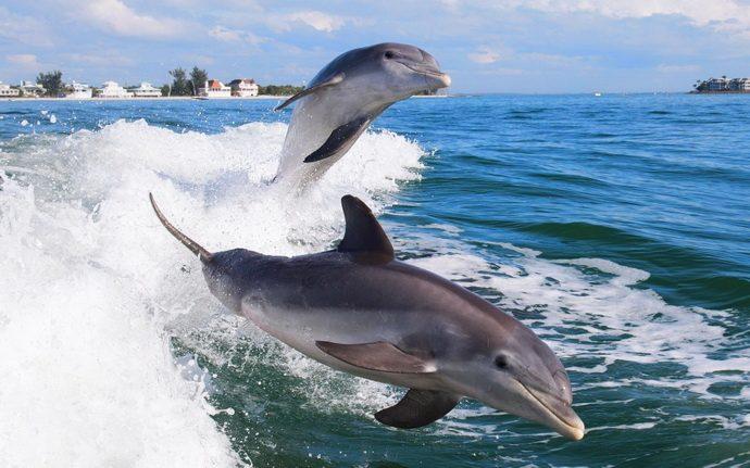 delfiny-okean