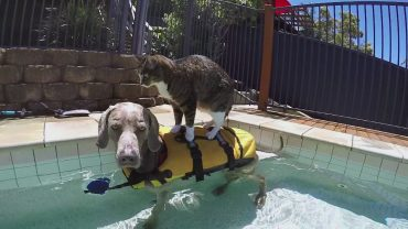 didga-the-dog-surfing