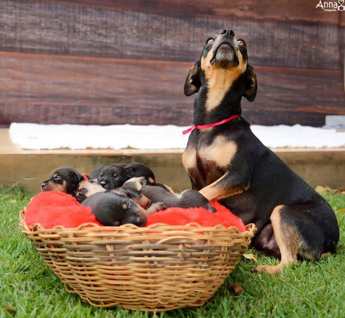 dog-maternity