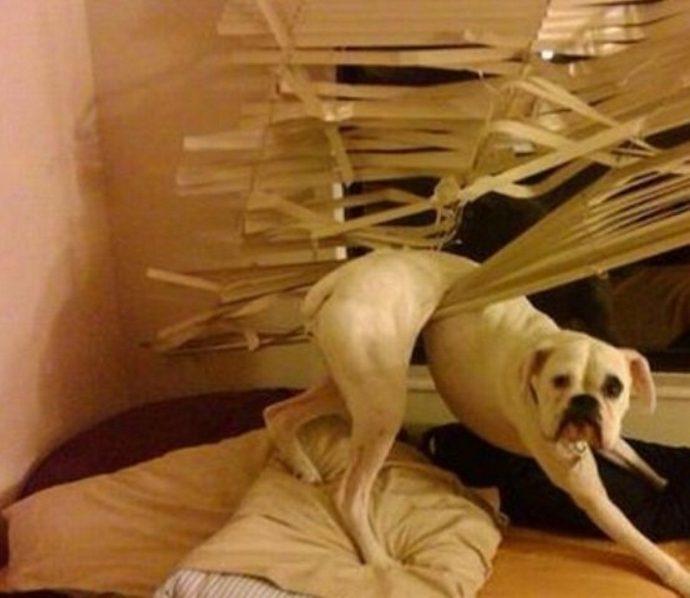 dog-rest