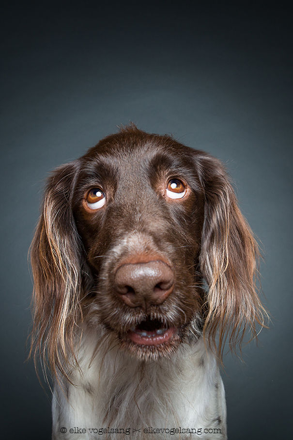 dogs-questioning (10)