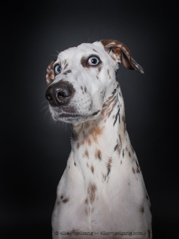 dogs-questioning (9)