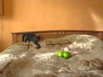 kitten and apples