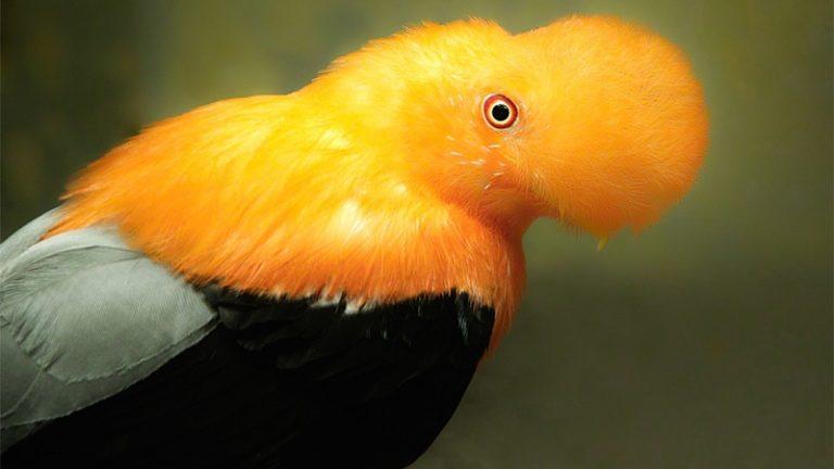 unique birds