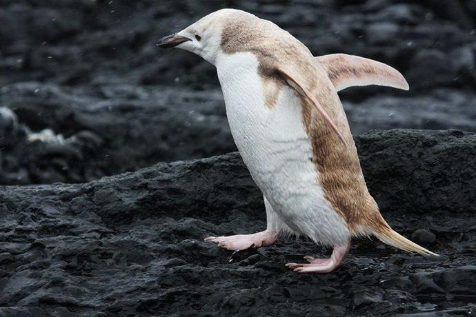 02-mutant-blonde-penguin