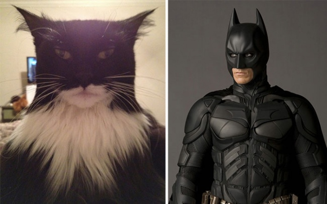 кот похож на Бэтмена