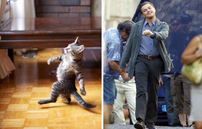 кот похож на Лео