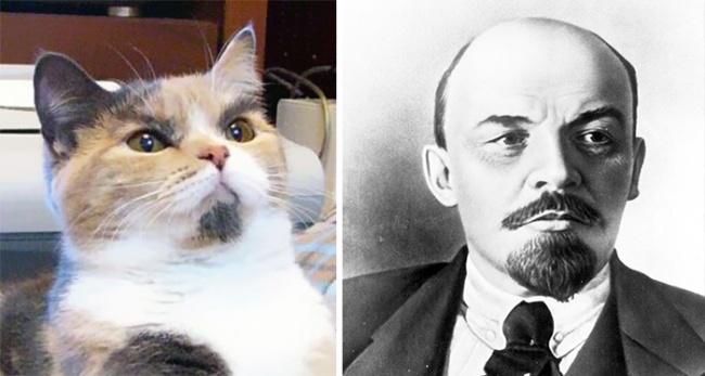 кот похожий на Ленина