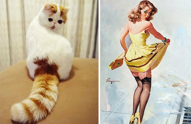 кот похож на пин ап девушку