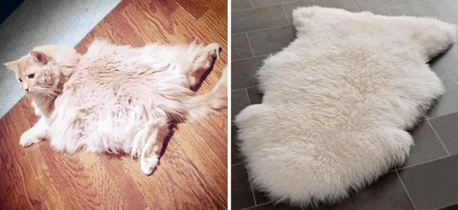 кот похож на коврик