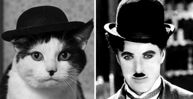 кот похож на Чарли Чаплина