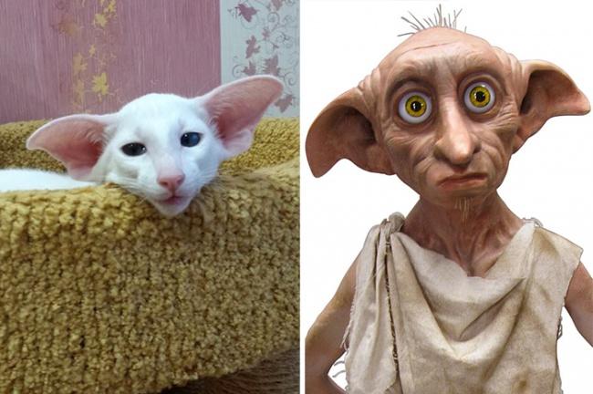 кот похожий на Добби