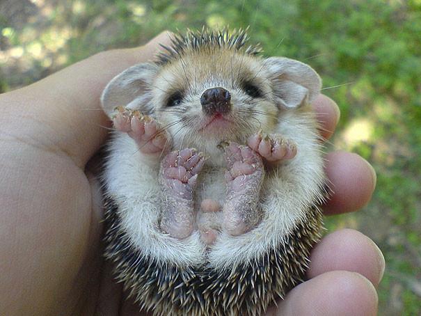 animal small