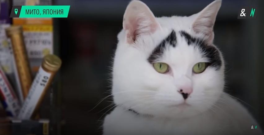 Кошка Хати