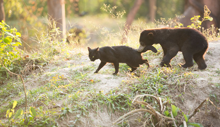 Bear Ka Wao and cat George