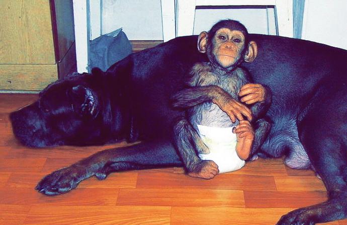 этого можно фото и картинки обезьяны на собаках всех странах