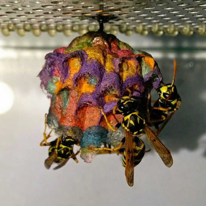 wasp-nests