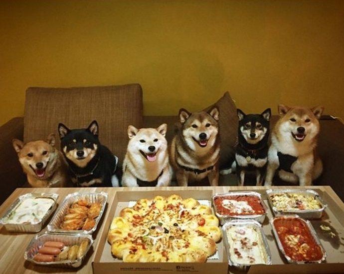 dogsandpizza (2)