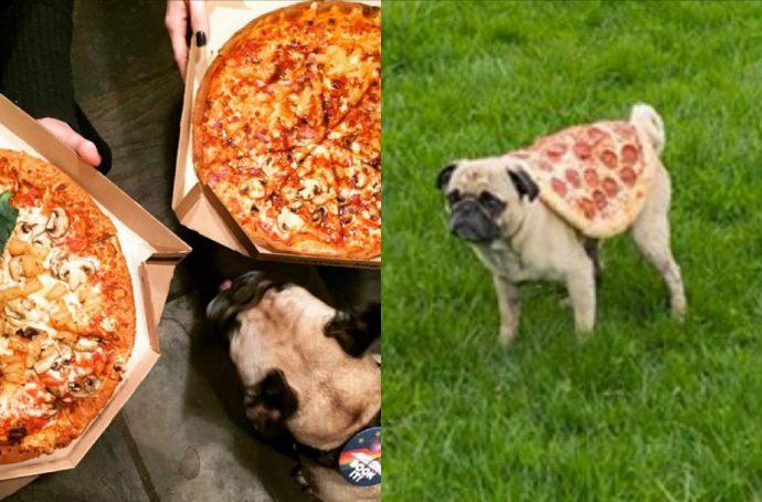 dogsandpizza (3)