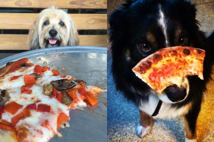 dogsandpizza (8)