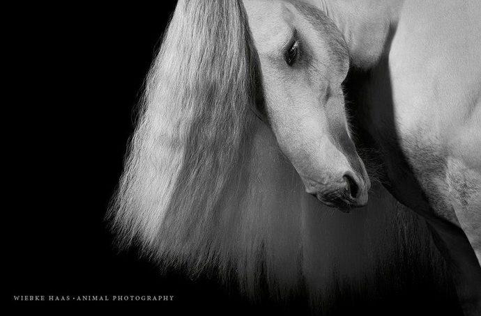 horse16