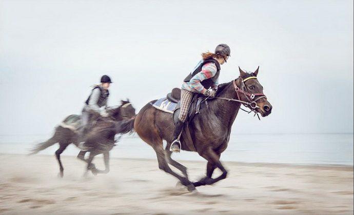 horse19
